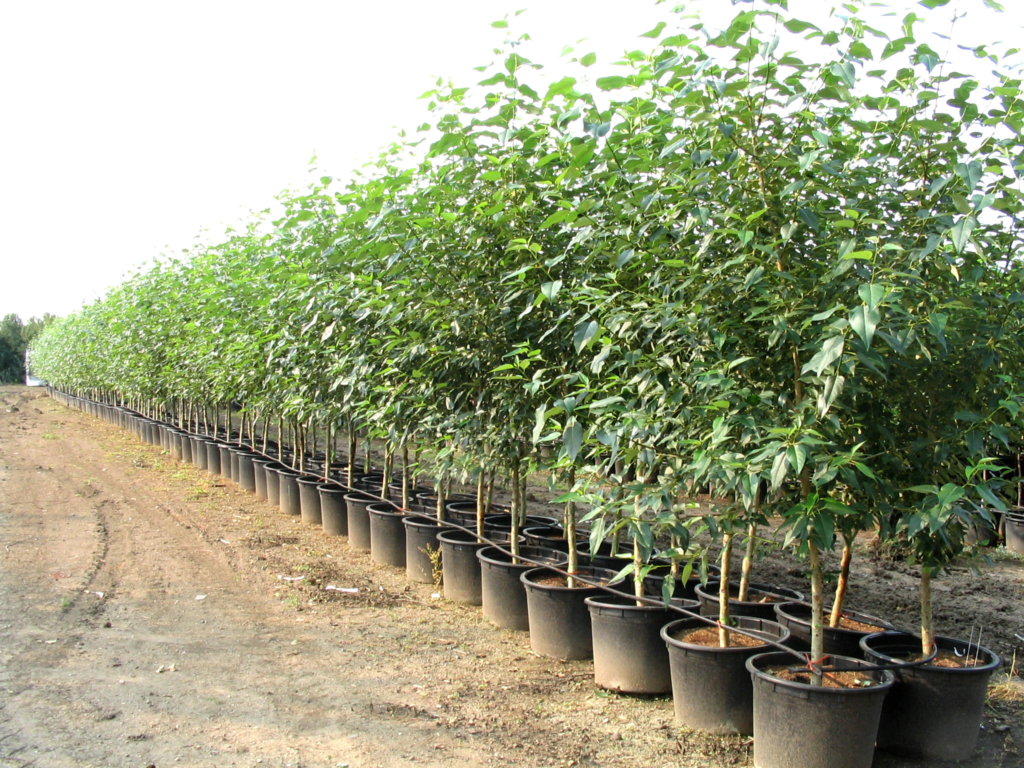 Tree Seedling Nursery Containers Canada Thenurseries
